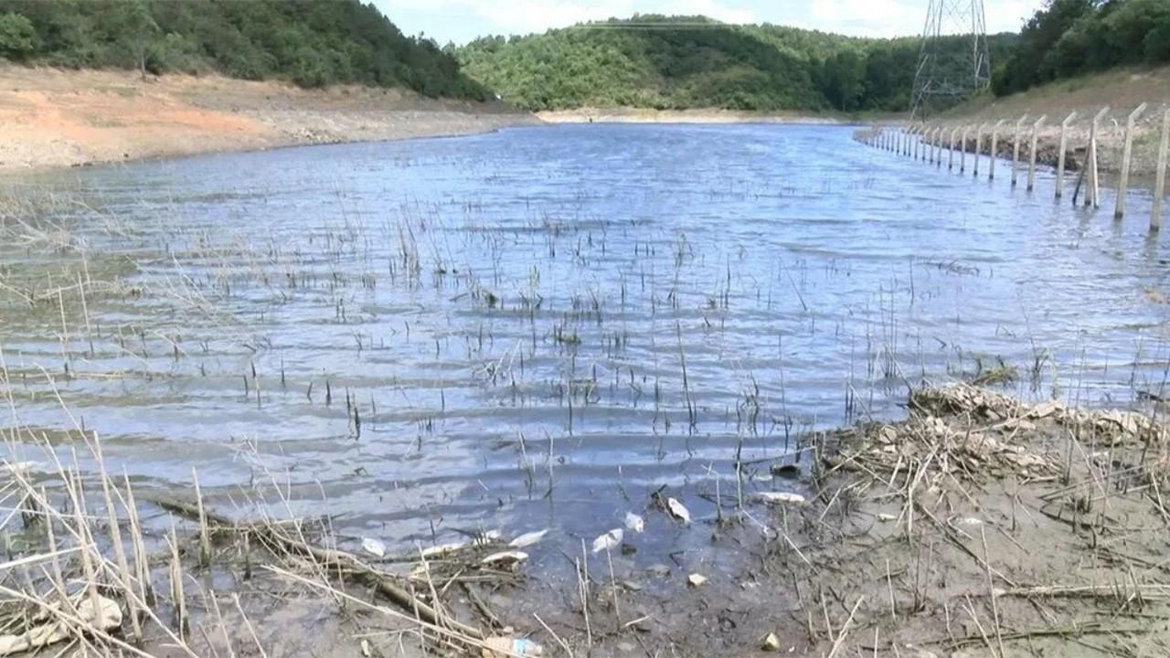 Alibeyköy Barajı'nda toplu balık ölümleri