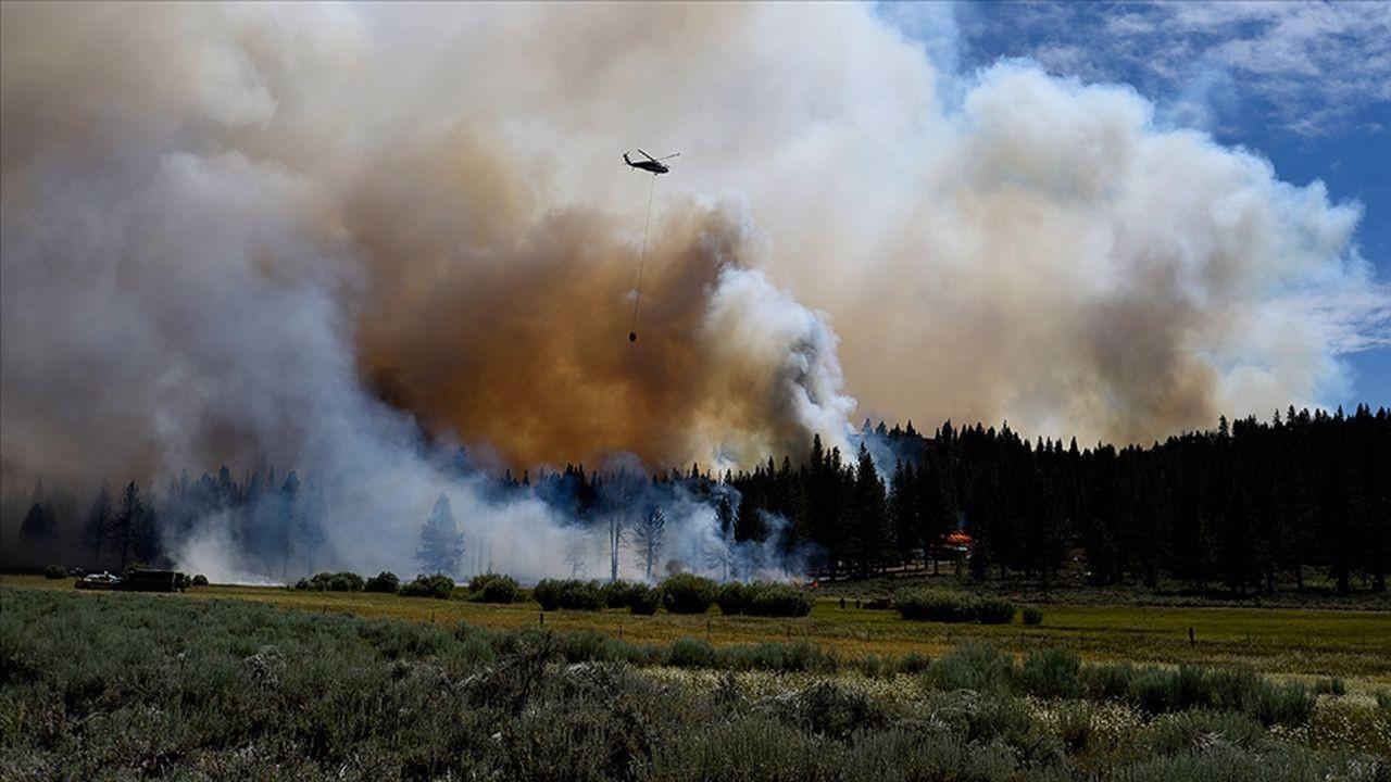 ABD'deki orman yangınlarında New York, Los Angeles ve Chicago kentlerinin toplamı büyüklüğünde alan yandı