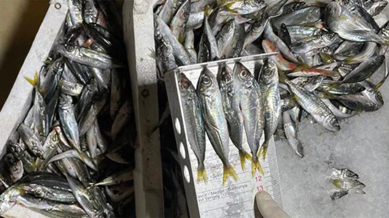 8 ton 795 kilogram balığa el konuldu