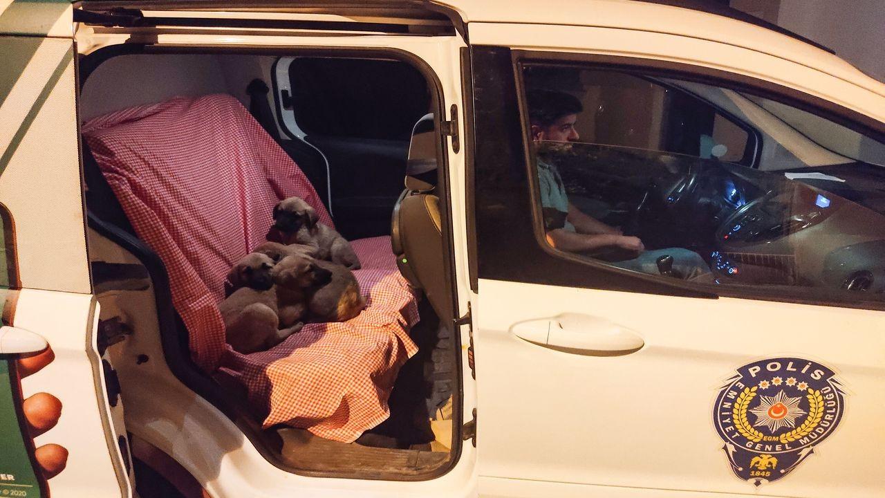 Tunceli'de ölüme terk edilen köpekler kurtarıldı