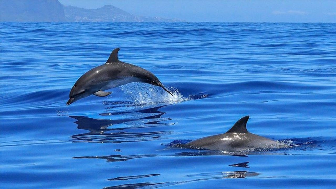 1500'e yakın balina ve yunus katledildi