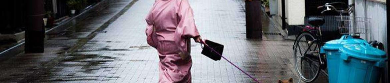 Japonya'da köpek çişleri trafik ışığını yıktı
