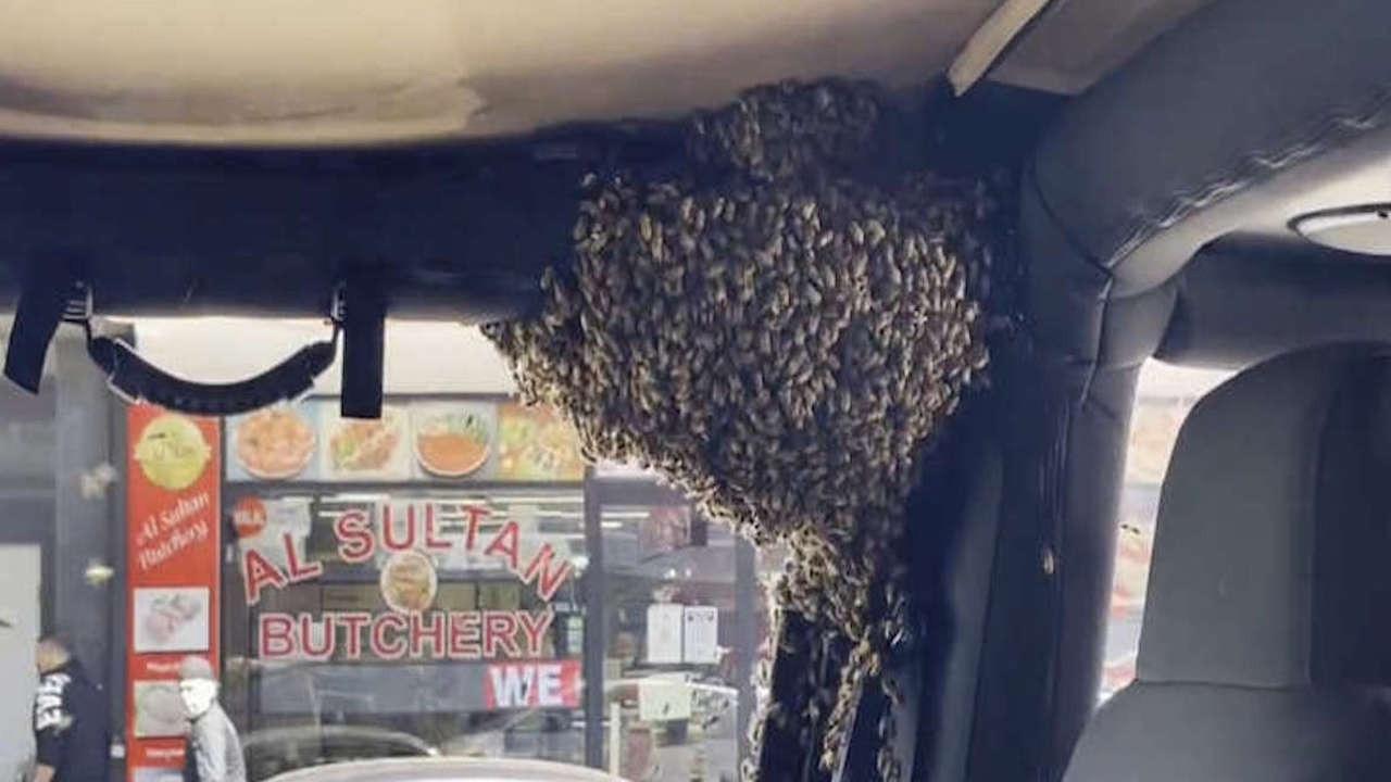 Avustralya'da arılar otomobili istila etti