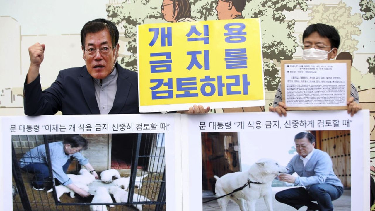 Güney Kore'de köpek eti yemeye yasak geliyor