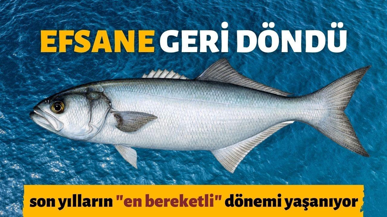 Marmara Denizi'nde lüfer bolluğu