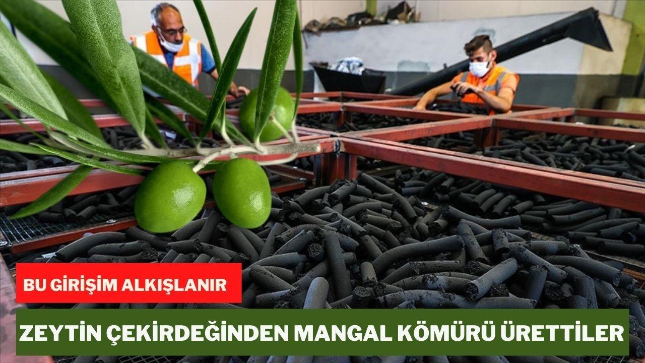 Zeytin çekirdeğinden mangal kömürü ürettiler