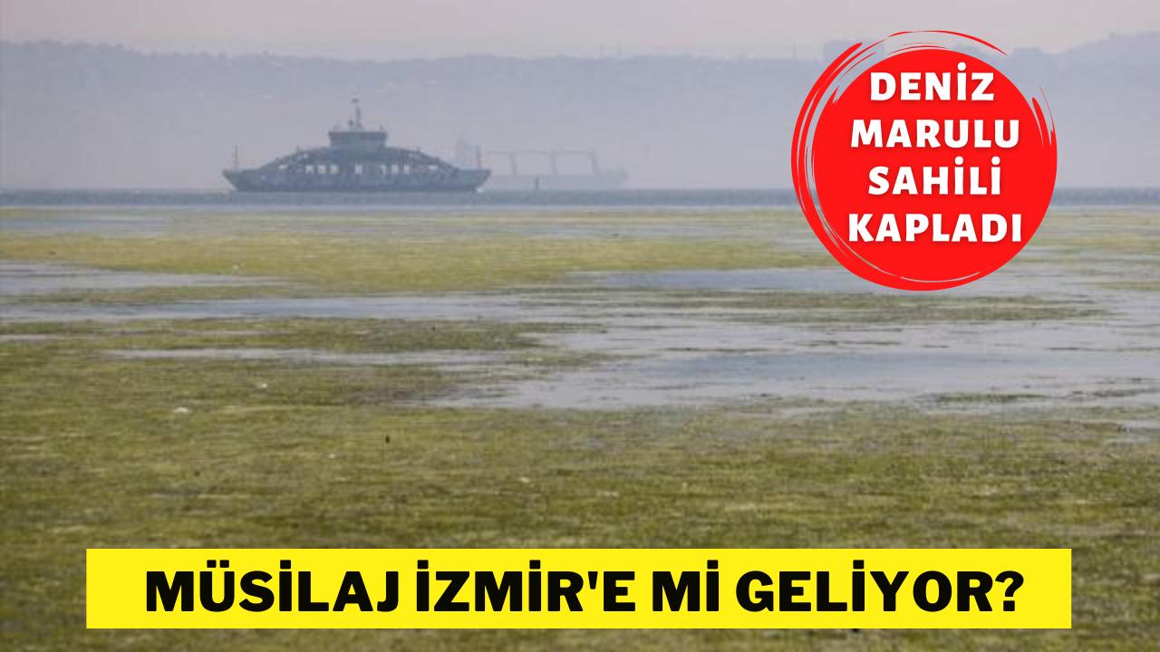 İzmir'de müsilaj tehlikesi