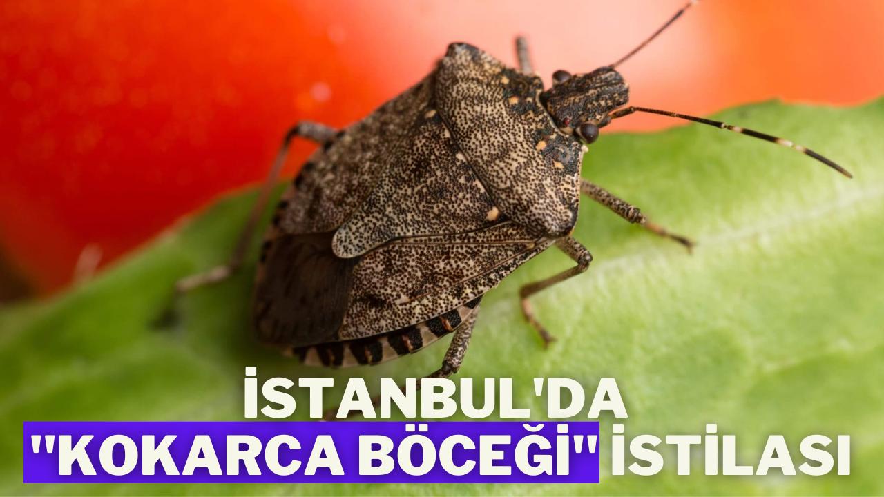 """İstanbul'da """"Kokarca Böceği"""" istilası"""