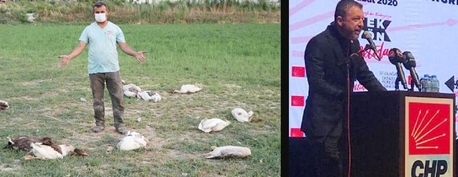 CHP'li başkan katliam yaptı!